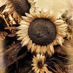 Oklahoma Sunflower, OSU Botanical Gardens